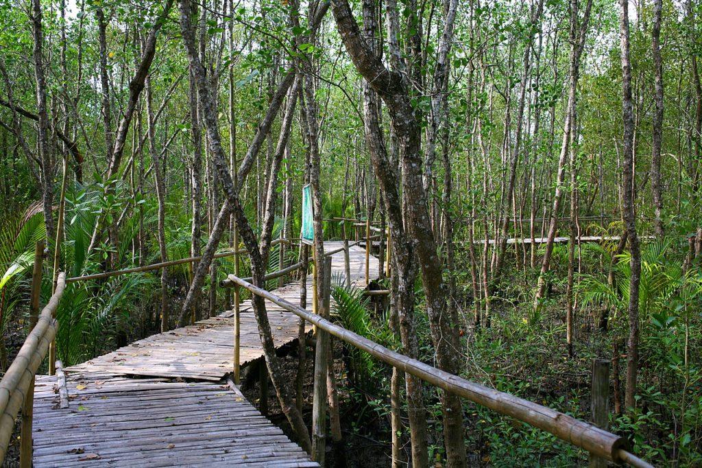 Bakhawan Eco-Park, Philippines