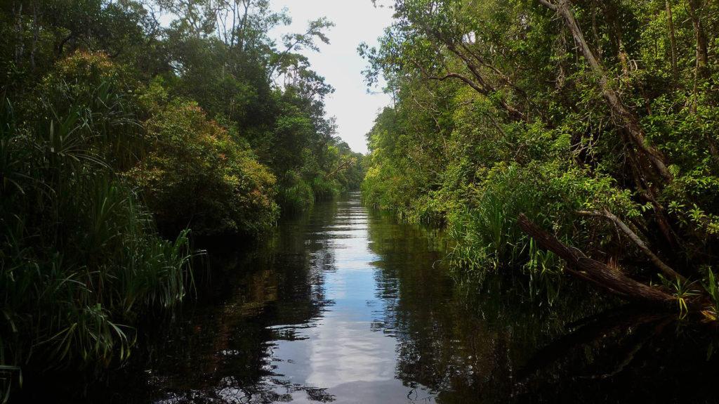 Taman Nasional Tanjung Puting mangrove forest