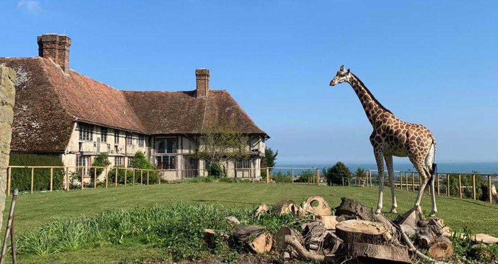 giraffe hall world's coolest hotels